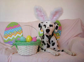 Cooper The Easter Bunny
